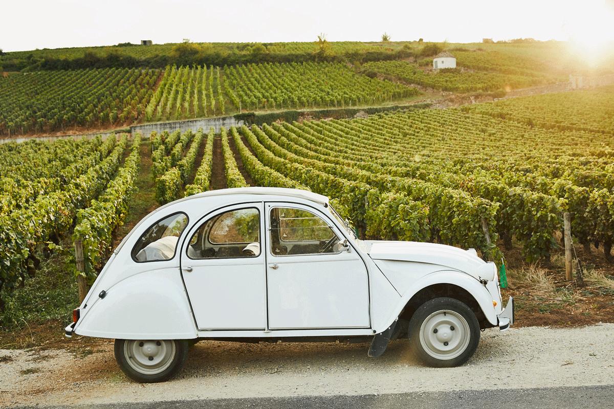 Car in the vineyard