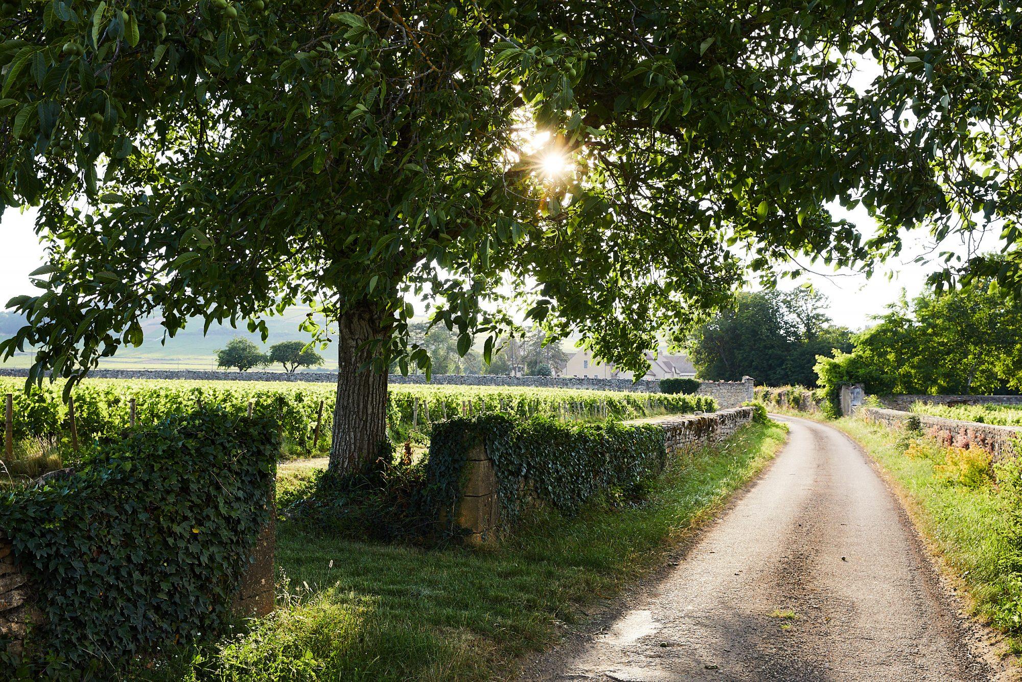Chateau_de_Pommard_Landscapes_169 - copie